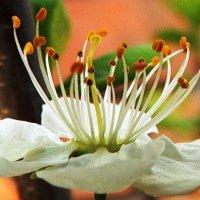 Ох, не знаю я что за цветущее дерево у нас когда-то было... :: Татьяна Котова