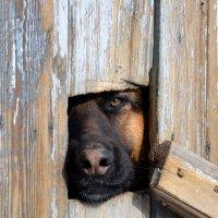 «Тайное окно» (англ. Secret Window) — собака по клички  Морт Рейни :: Вадим Поботаев