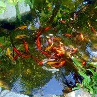Рыбки. :: Чария Зоя