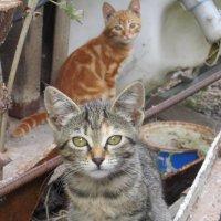 Кошачья жизнь :: Zinaida Belaniuk