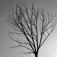 Дерево... :: FullHouse ;)