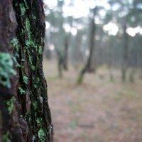 в лесу :: Oxi --