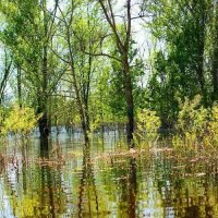 Природа :: Николай Фролов