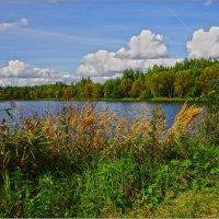 Пруд на речке Липенке :: mila