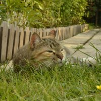 Дайте поспать, лезут со своим фотоаппаратом, понимаете-ли... :: Julia Miloserdova