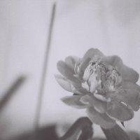 квітка :: Ярослав Ярослав