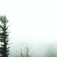 Всё в тумане... :: Ольга Иргит