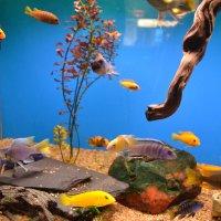 Подводное царство :: Ольга