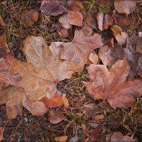 листья :: Ольга Прозорова