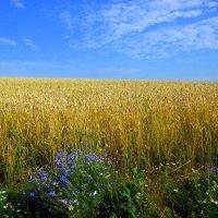 Русское поле :: оля san-alondra