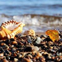 Морские камушки :: Татьяна Беляева