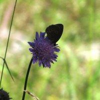 Бабочка :: Ольга Иргит