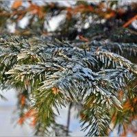 Разноцветная зима :: Aquarius - Сергей