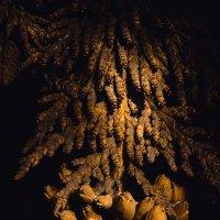 Ветка туи с семенами :: Юра Викулин