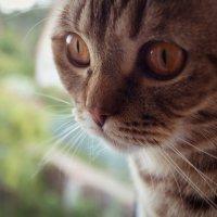 Любимый кот :: Виктория Альшанец
