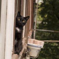 Жил да был черный кот за углом ... ) :: Ольга Винницкая