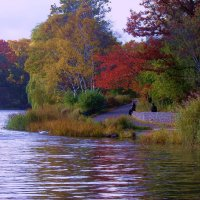 Осенний парк в Торонто :: Юрий Поляков
