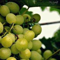 Виноград :: Карина Дудина