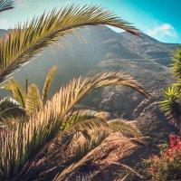 Райская жизнь :: Кристин Чаговец