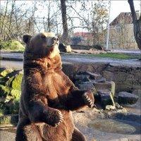 Калининград,зоопарк :: Татьяна Осипова(Deni2048)