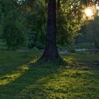И первый солнца луч... :: Юрий Цыплятников