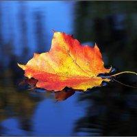 Жёлтым листиком в реке утонуло лето :: Виктор Колмогоров