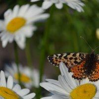 Бабочка :: Savayr