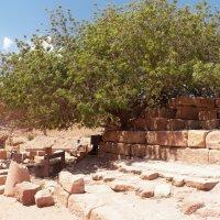 Древнее дерево ботом. :: Жанна Мааита