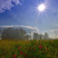 В солнечных лучах :: Татьяна Кретова