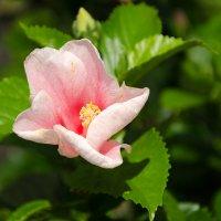 Цветок №19 :: Сергей Анисимов
