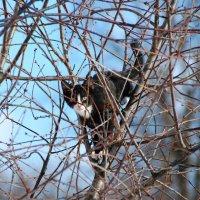 Один из многочисленных котят Муси... :: Татьяна Котова