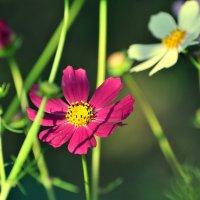 Цветы :: Андрей Куприянов
