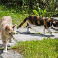 Шелли и Буся на прогулке :: Ивета Бривце