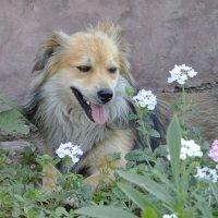 Кузя в цветочках :: Игорь Попов