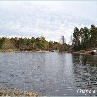 Озеро в парке :: Lyubov Zomova