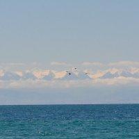 Снежные вершины :: Елена Привалова