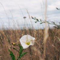 Цветок :: Юлиана Мещерякова