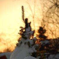 В Нескучном саду на закате :: Сергей Васильевич