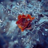 Холод :: Катерина Лебедева
