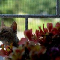За окном .... :: ФотоЛюбка *