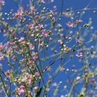Под голубыми небесами :: Mariya laimite