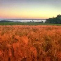 Утро в полях :: Валерий Талашов