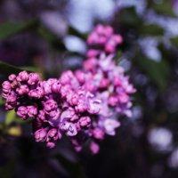Весна :: Анастасия Лоцман