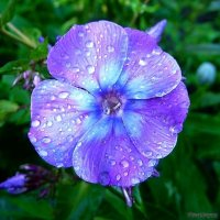 Сказочный цветочек :: Виктор ☼TYGRYS☼