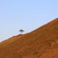 Одинокое дерево на горе :: Евгения Беркина