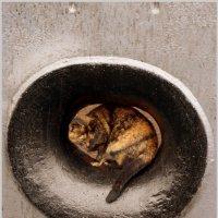 Кошка в клюзе :: Кай-8 (Ярослав) Забелин