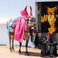 Индия :: Маргарита