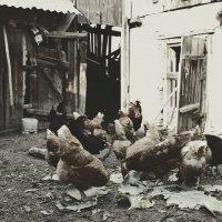 ребята с нашего двора. :: Наталья Бридигина