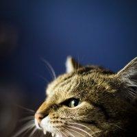 Тигра! :: Андрей Леднев