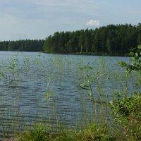 Карелия, озеро Контокки :: Наталья